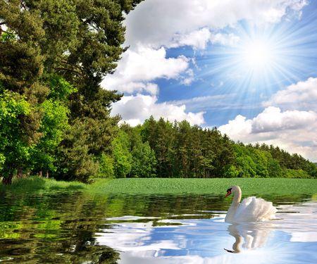 swan lake: Swan Lake  Stock Photo