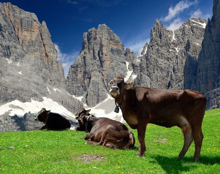 cow pasture behind the mountain Brenta- Dolomites Italy
