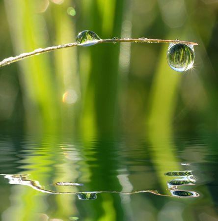 particular: dew