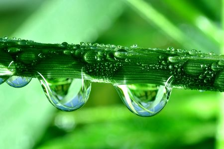 grass close up: Fresh grass with dew drops close up