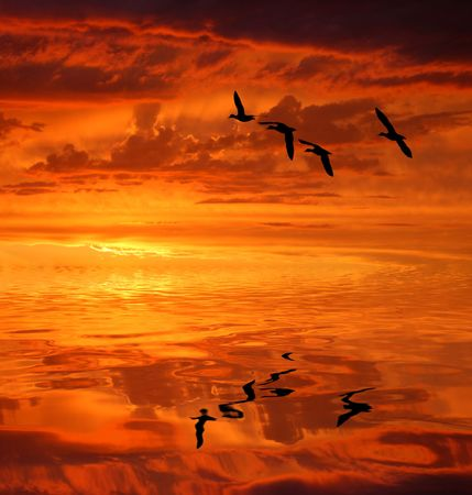 gules: the silhouettes waterbirds under the sun