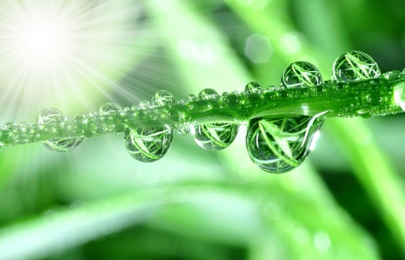 Fresh grass with dew drops close up  Stock Photo - 8277404