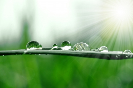 background environment: Fresh grass with dew drops close up