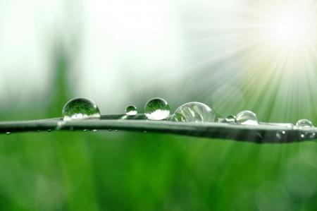 medio ambiente: Hierba fresca con Roc�o cae cerca hasta  Foto de archivo