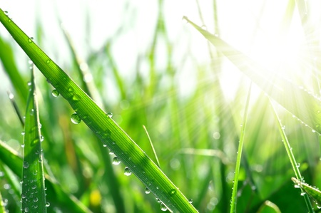waterdrop: Fresh grass with dew drops close up