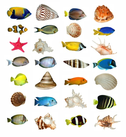 coral reef underwater: collection of marine animals Stock Photo