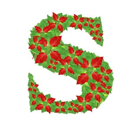 Christmas Alphabet from poinsettia Stock Photo