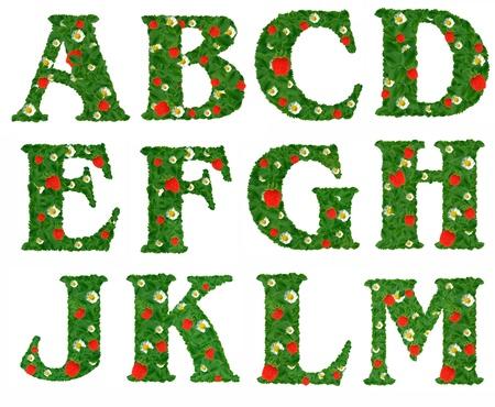 alphabet of strawberry  photo