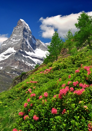 mountain meadow: views of the Matterhorn - Swiss Alps  Stock Photo