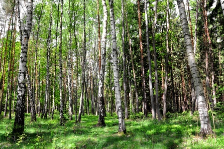 Spring in the deciduous forest  photo