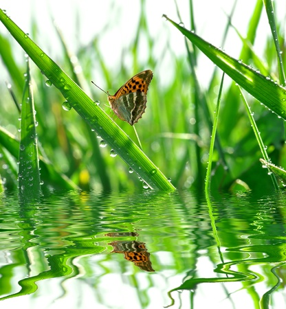 fresh morning dew and butterfly