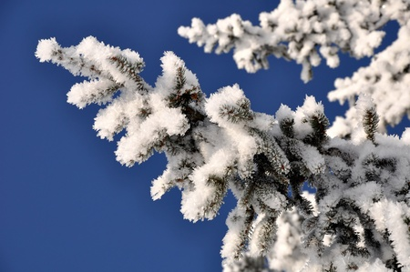 frosty tree branch in winter Stock Photo - 8579828