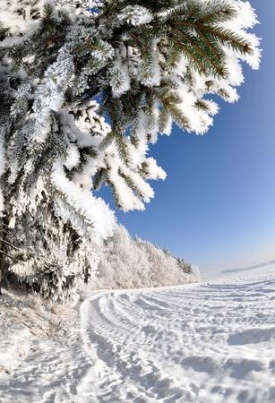 frozen tree  Stock Photo - 8579863