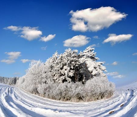 Frozen tree Stock Photo - 8579854
