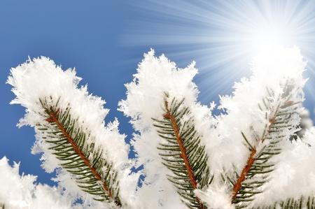 Frozen tree Stock Photo - 8579798