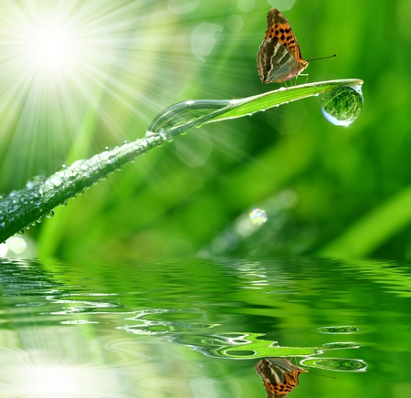 fresh morning dew and butterfly  photo