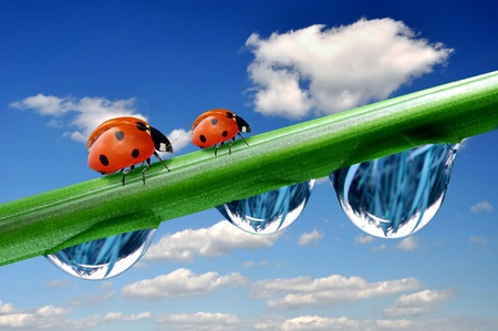 wildlife conservation: Fresh grass with dew drops and ladybird