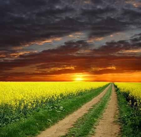 sunset over rape field photo