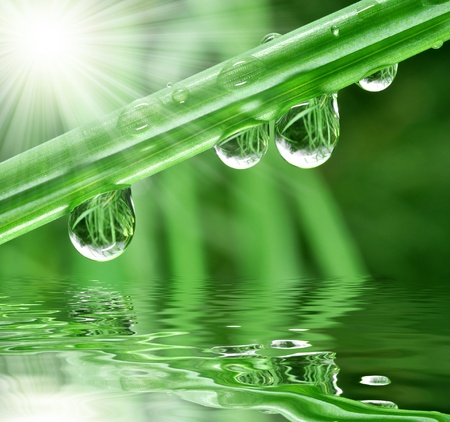 grass close up: Fresh grass with dew drops close up Stock Photo