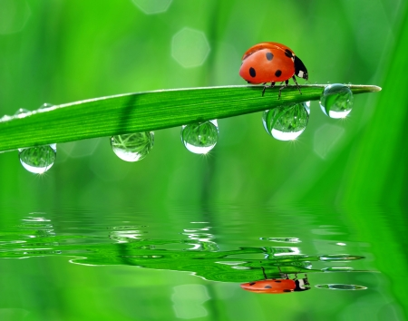 fresh morning dew and ladybird photo