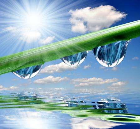 kropla deszczu: Świeże trawy z roszenia blisko spadnie w górę