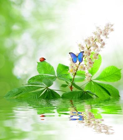 marienkäfer: Kastanien Blume mit Schmetterling  Lizenzfreie Bilder