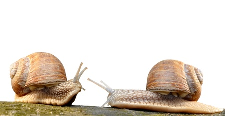 Snail against white background photo