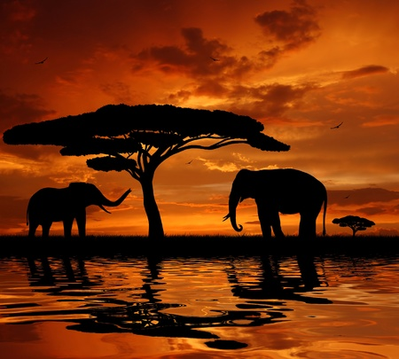 serengeti: Silhouette two elephants in the sunset