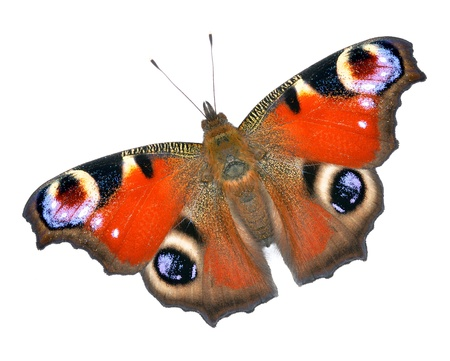 Close up view of the batterfly  Stock Photo