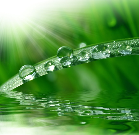 leaf water: Fresh grass with dew drops close up