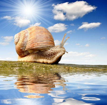 slime: Garden snail (Helix aspersa)