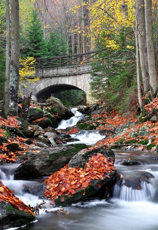 bohemia: autumn creek in bohemia  Stock Photo