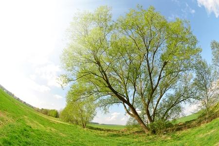 spring landscape - fisheye shot photo