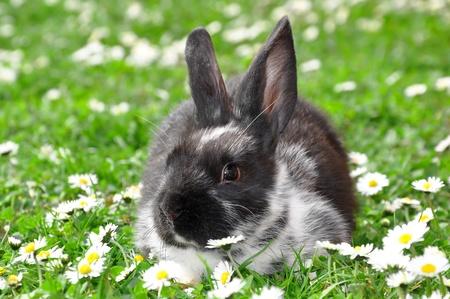bunnie: Cute Rabbit in Grass