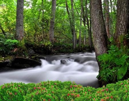 beck: Creek in the national park Sumava-Czech Republic