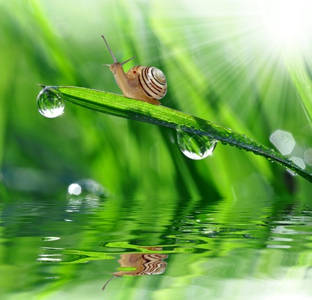 grass close up: Snail on dewy grass  Stock Photo