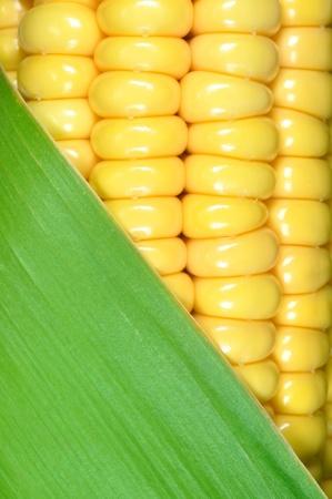 husks: corn closeup  Stock Photo