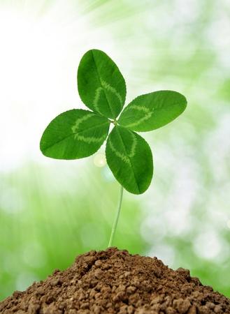 clover Stock Photo - 10663951