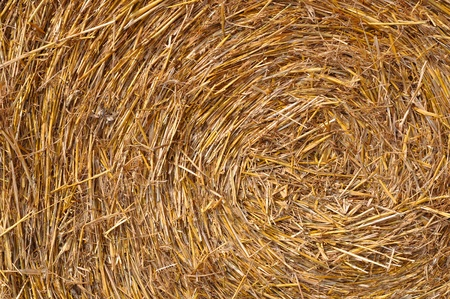 Texture of straw.  photo