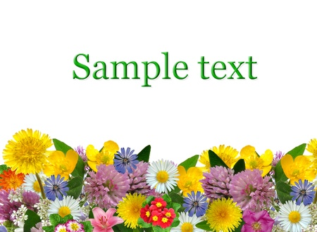 meadow flowers isolated on white background  Stock Photo