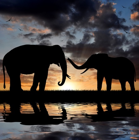serengeti: silhouette elephant in the sunset
