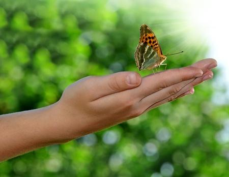 vlinder op de handen van kinderen Stockfoto
