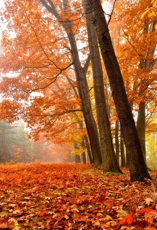 colorific: autumn in Czech Republic Stock Photo