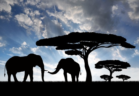 land animals: Silhouette elephants in the sunset