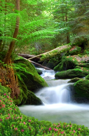 ferns: Waterfall in the national park Sumava-Czech Republic