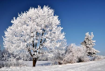 christmas landscape: Frozen tree Stock Photo