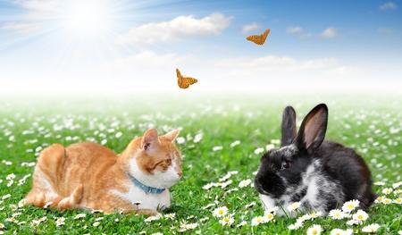 bunnie: cute rabbit with cat