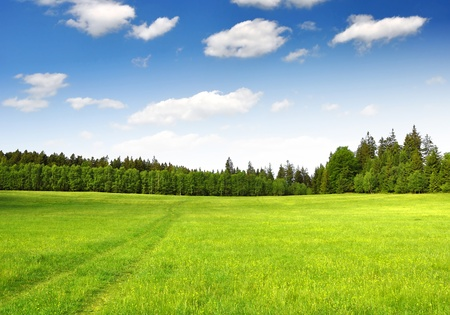 grass field: Spring landscape in the national park Sumava - Czech Republic