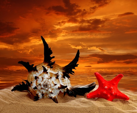Conch shell with starfish on beach in the sunset Stock Photo - 11875556