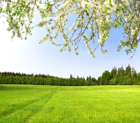 spring landscape: Spring landscape in the Czech Republic
